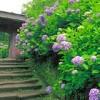28日のきもので鎌倉散策